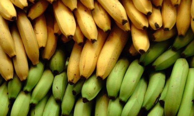 Diferencias entre la banana y el plátano ¡No son iguales!